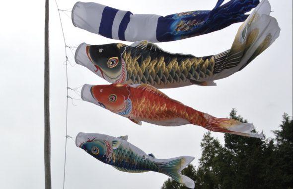 彦根市で新築注文住宅は旬スタイル鯉のぼり